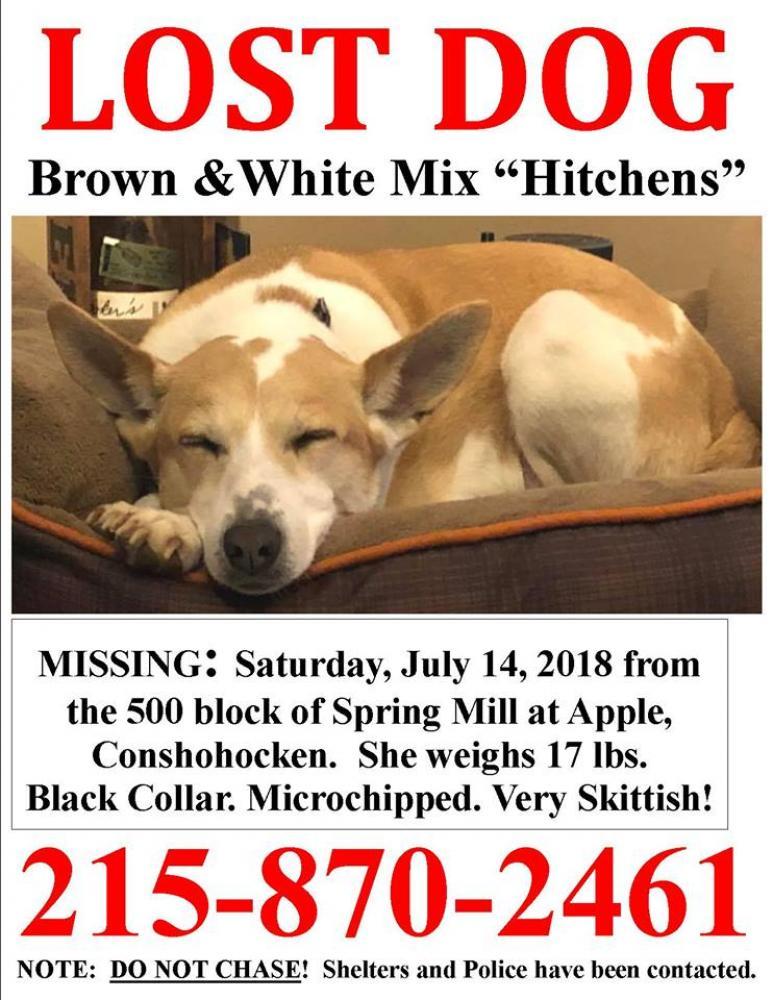 Lost Female Dog last seen Near Spring Mill Ave & E 5th Ave, Conshohocken, PA 19428