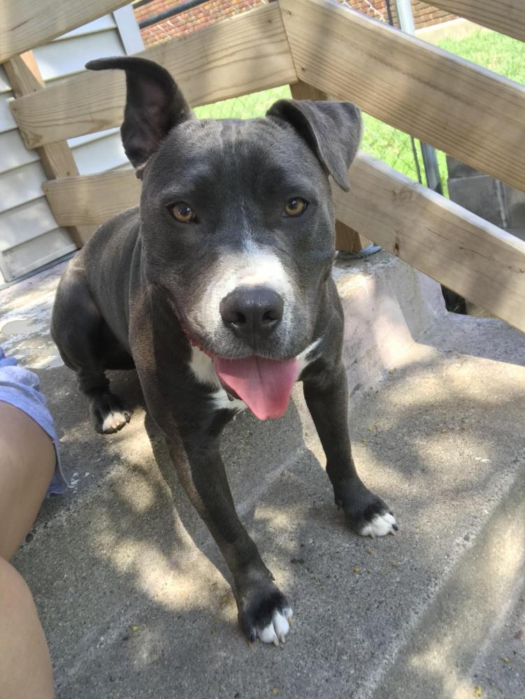 Lost Male Dog last seen Near 2nd Ave S & E 38th St, Minneapolis, MN 55409