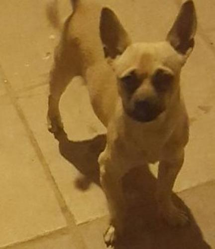 Lost Male Dog last seen Near W Campbell Ave phx ariz, Phoenix, AZ 85033