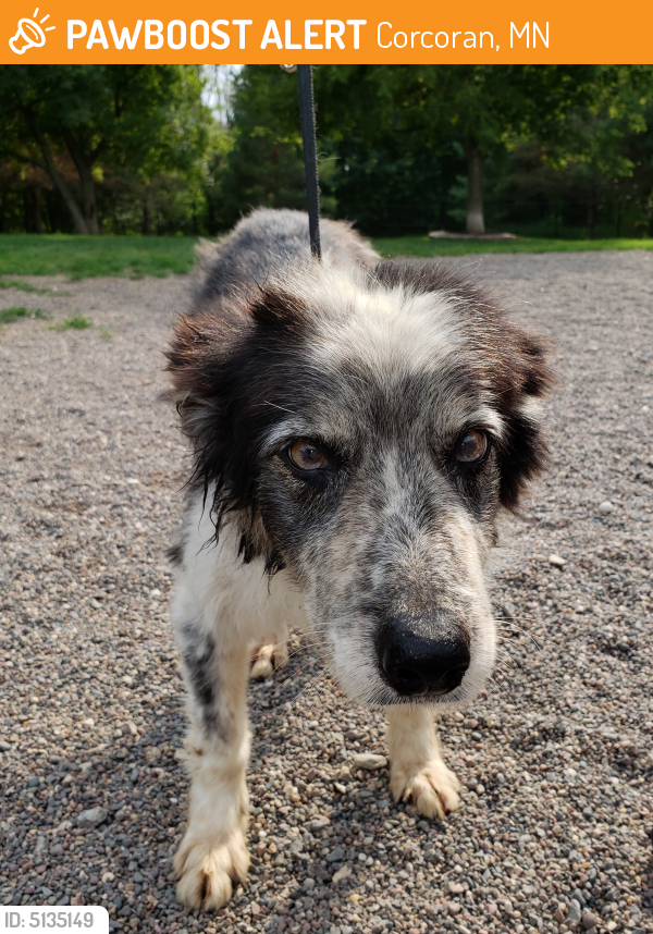 Rehomed Female Dog last seen CR-9 and CR-30, Corcoran, MN 55374
