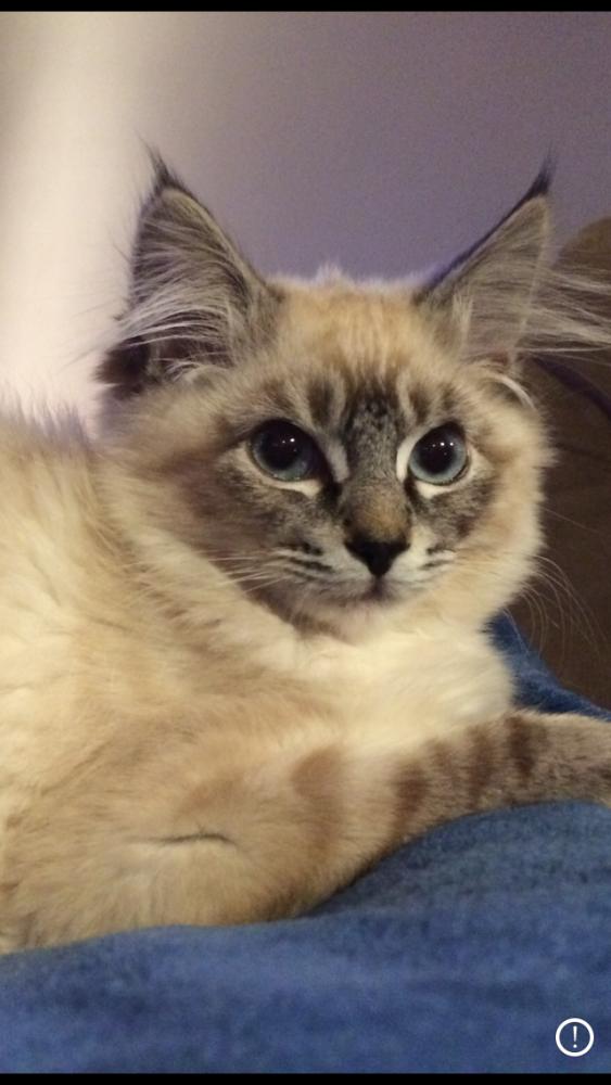 Lost Female Cat last seen Holcomb Blvd & Oaktree Terrace, Oregon City, OR 97045