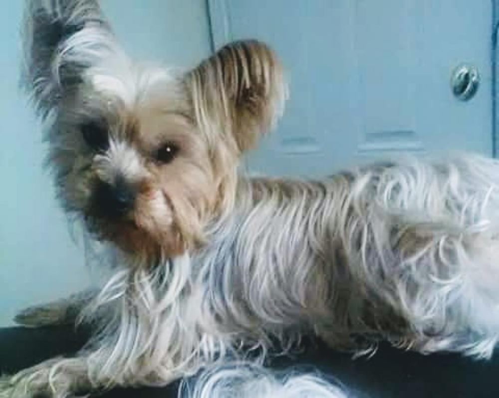 lost male dog last seen ingram dr and walmart across st king nc 27021
