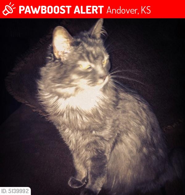 Lost Female Cat in Andover, KS 67002 Named Boo (ID: 5139992