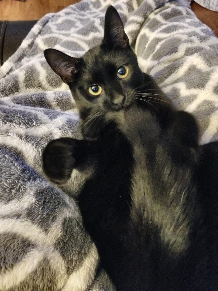 Lost Female Cat last seen Near W Sageberry Dr & W Sagebrush Dr, Boise, ID 83709
