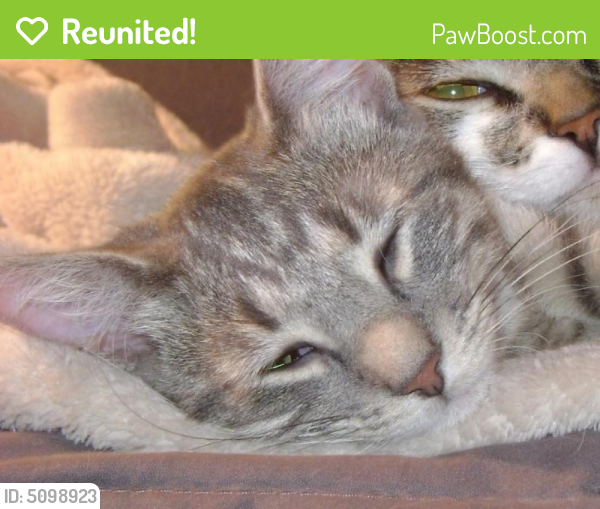 Reunited Female Cat last seen Near Weeping Willow Way & Oysterwood Ct, Hollywood, FL 33019