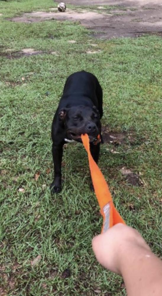 Lost & Found Dogs, Cats, and Pets in Mobile, AL 36582 - Page