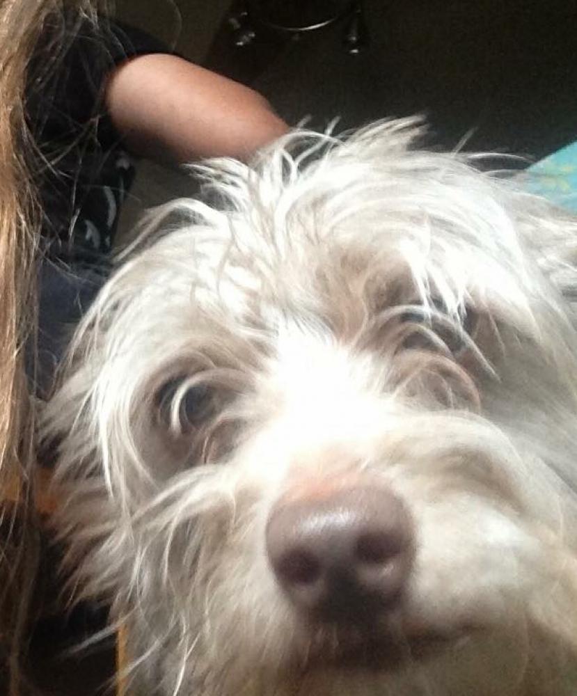 Lost Male Dog last seen Near Buffalo and Flamingo, Las Vegas, NV 89147