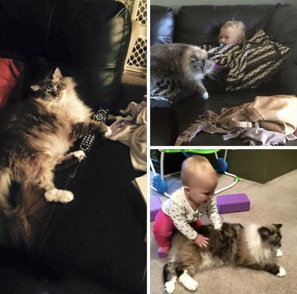 Lost Male Cat last seen Near Main St, Saskatoon, SK, Canada, Saskatoon, SK S7H 0J9