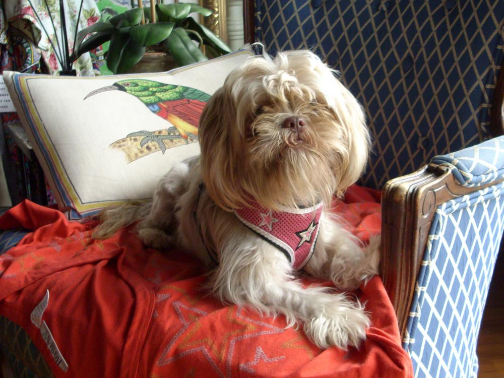 Found/Stray Female Dog last seen Near SW 16th Ct & SW 6th Ave, Fort Lauderdale, FL 33316