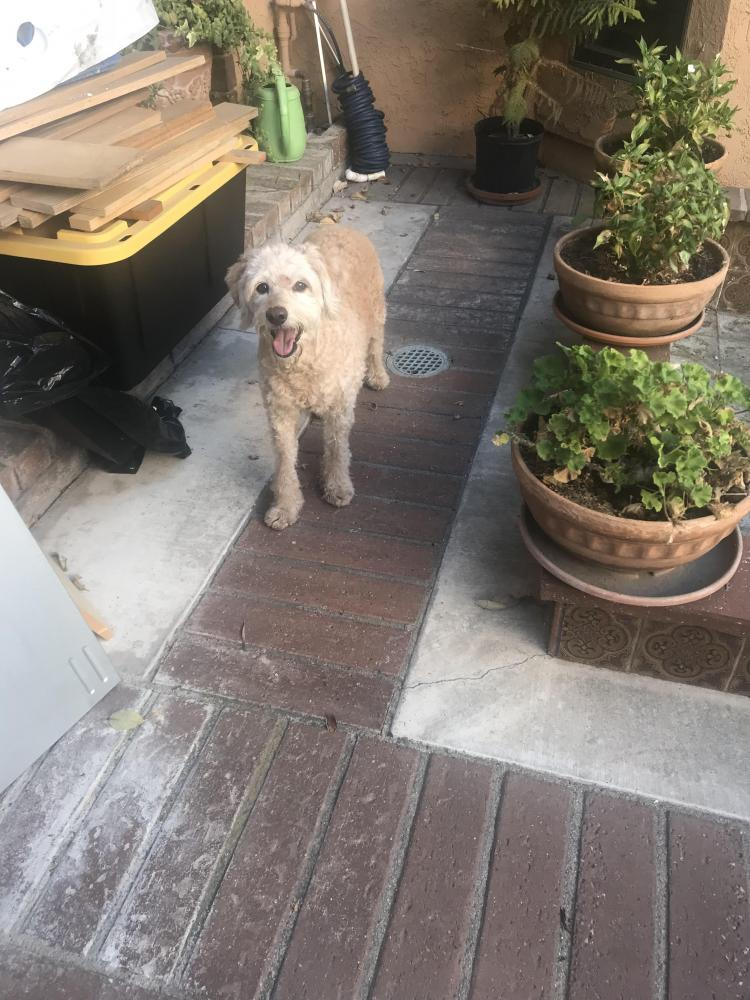 Found/Stray Female Dog last seen Edinger Ave, Huntington Beach, CA, USA, Huntington Beach, CA 92647
