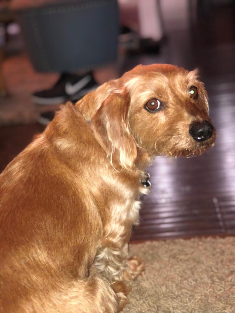 Lost Male Dog last seen Near Avolinda Dr & Plumosa Dr, Yorba Linda, CA 92886