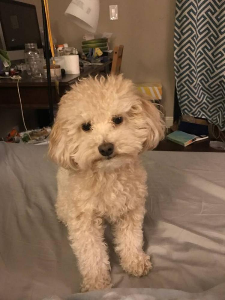 Lost Male Dog last seen Near Countryside Dr & Hidden Trail Pl, Walnut, CA 91789