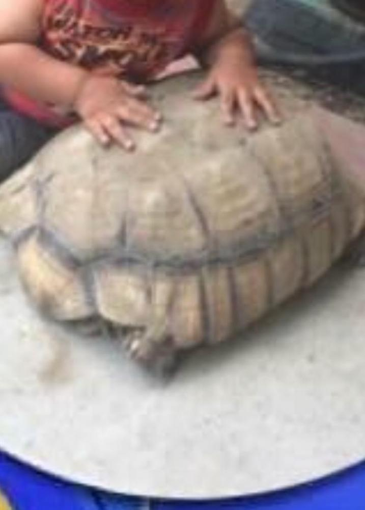 Lost Unknown Reptile last seen Near E Almond Dr & E Redwood Ave, Anaheim, CA 92805
