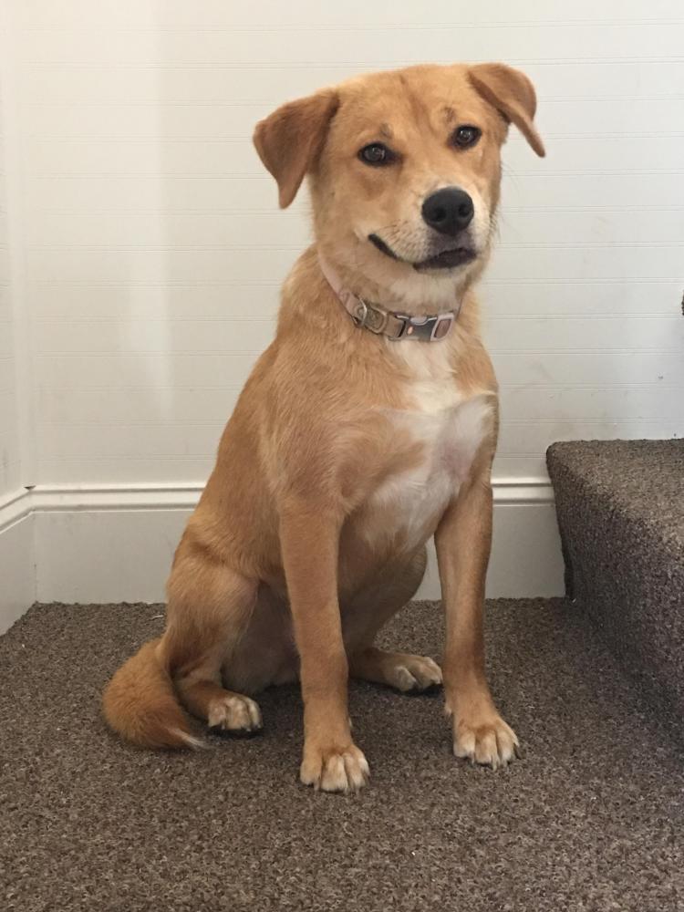 Lost Female Dog last seen Near Bradley Ave & Elm Ct, Cincinnati, OH 45215