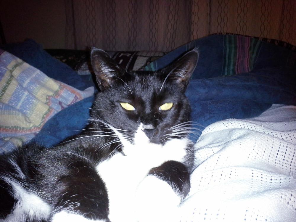 Lost Male Cat last seen Near Airport Road, Fort Bragg, CA, USA, Fort Bragg, CA 95437