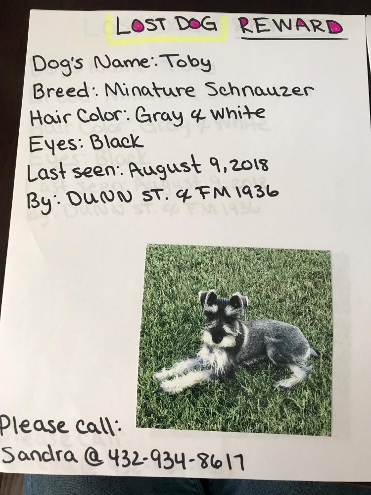 Lost Male Dog last seen Dunn St & N F-M 1936, Odessa, TX 79763