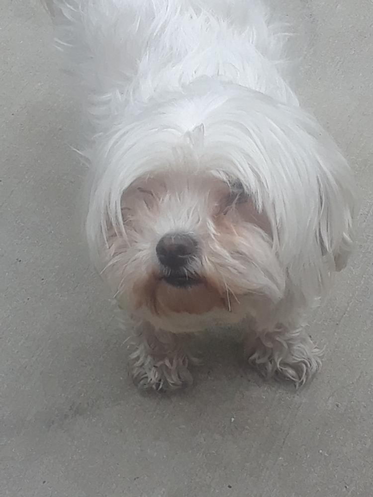 Lost Female Dog last seen Near Haverford Ave & N 41st St, Philadelphia, PA 19104