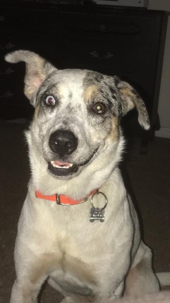 Lost Female Dog last seen Near Kacie Dr & Hartick Bluff Rd, Temple, TX 76502