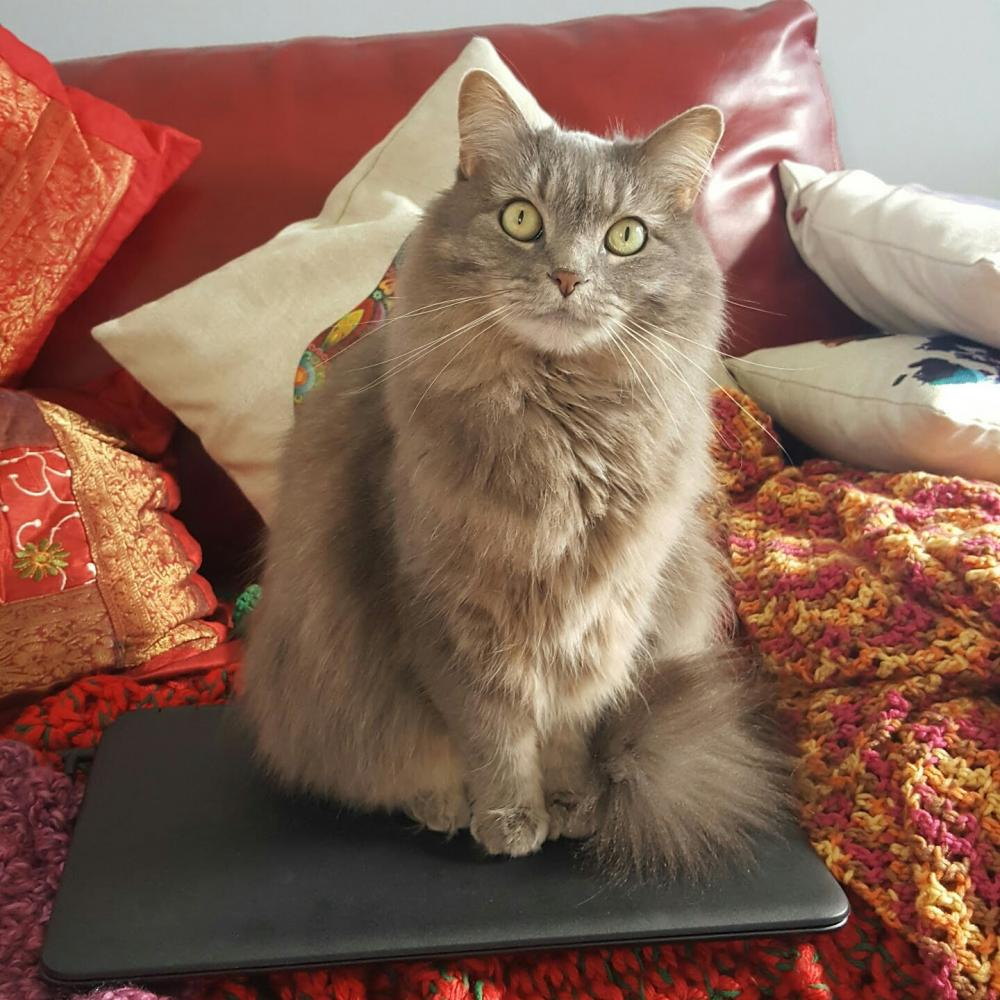 Lost Female Cat last seen Near Spring Valley Pike & Yankee Street, Dayton, OH 45458