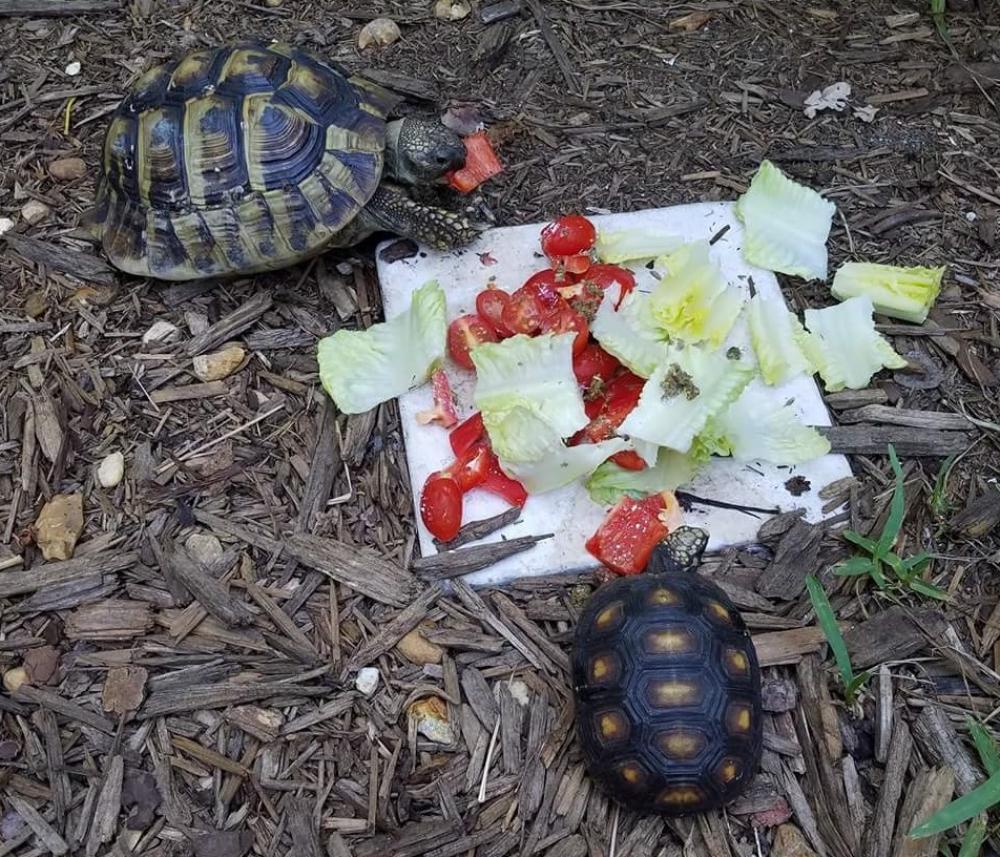 Lost Male Reptile last seen Near NE 7th Terr & NE 26th Ct, Pompano Beach, FL 33064