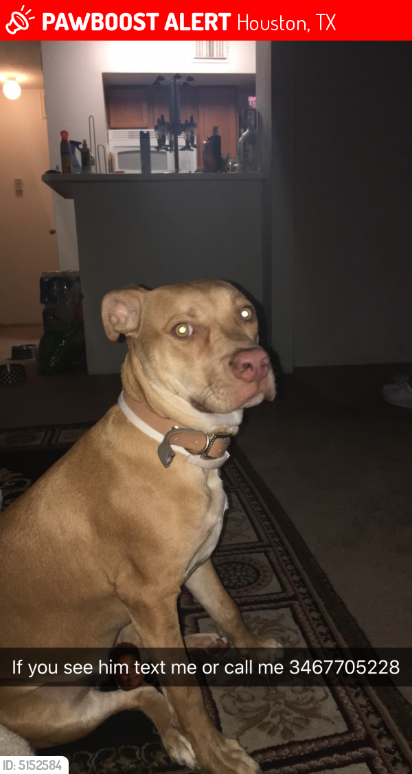 Lost Male Dog in Houston, TX 77082 Named Zues (ID: 5152584) | PawBoost