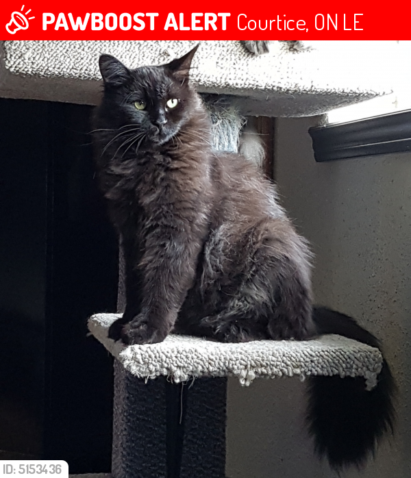 Lost Male Cat in Courtice, ON L1E Named Fudge (ID: 5153436