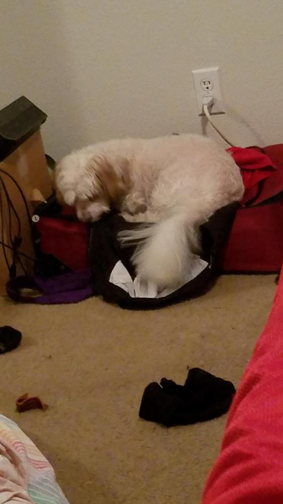 Lost Male Dog last seen Near Colonial Dr & NW 65th Ave, Margate, FL 33063