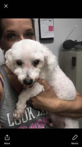 Lost Male Dog last seen Near S 4th St & W Mango St, Lantana, FL 33462