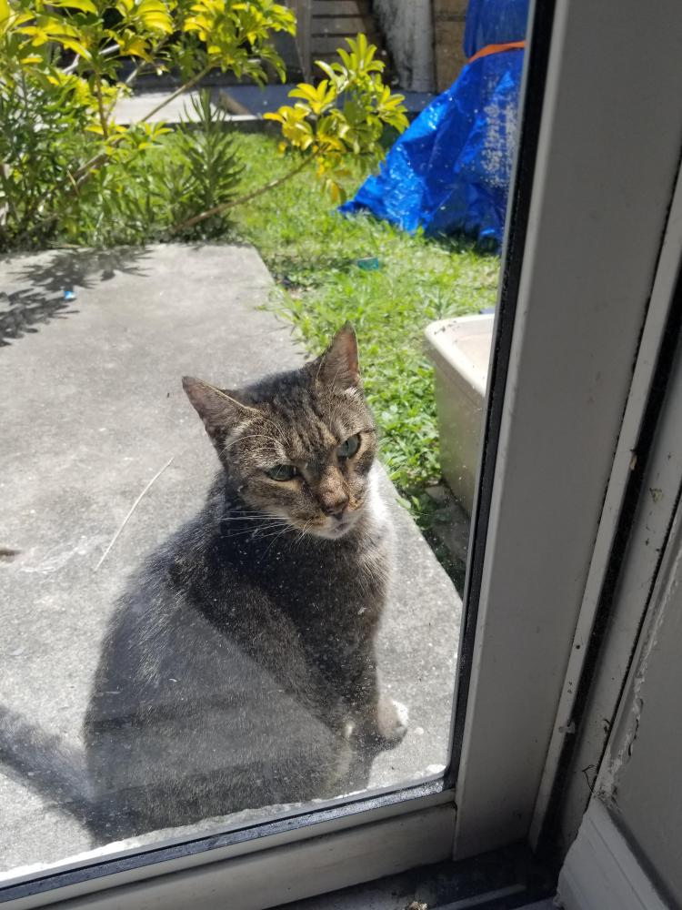Found/Stray Female Cat last seen Near SW 11th Ave & Waverly Rd, Fort Lauderdale, FL 33311