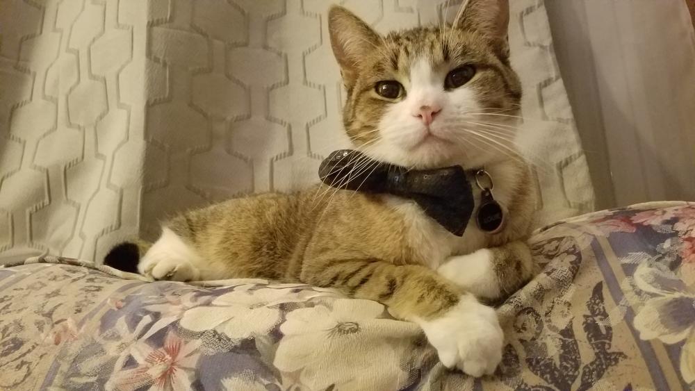 Lost Male Cat last seen Near Wills St & Fleet Dr, Alexandria, VA 22310