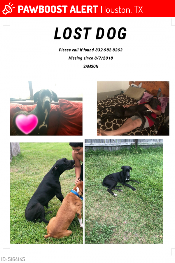 Lost Male Dog in Houston, TX 77013 Named Samson (ID: 5164145) | PawBoost