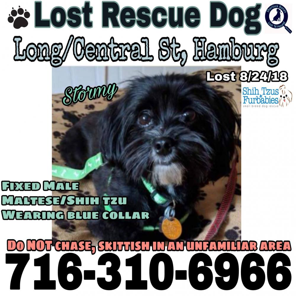 Lost & Found Dogs, Cats, and Pets in New York 14062 - Page 1