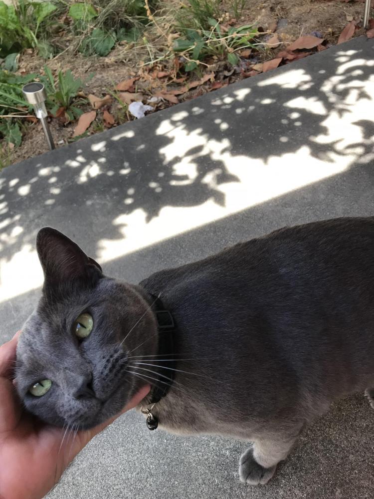 Found/Stray Female Cat last seen Near Loraleen St & Lampson Ave, Garden Grove, CA 92841