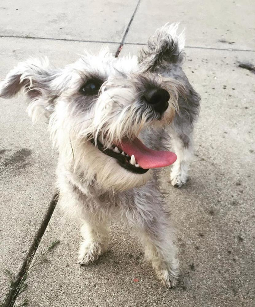 Lost Female Dog last seen Near W Fullerton Ave & N Central Park Ave, Chicago, IL 60647