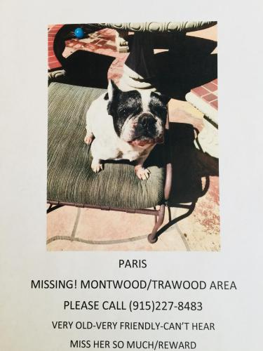 Lost Found Dogs Cats And Pets In El Paso Tx 79915 Page 2