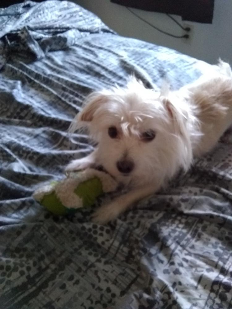 Lost Male Dog last seen Near NW 54th Ave & NW 180th Ter, Miami Gardens, FL 33055