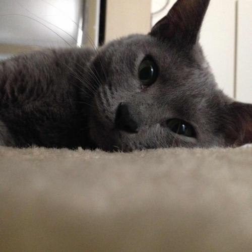 Lost Female Cat last seen Near SW 57th St & SW 99th Ln, Cooper City, FL 33328
