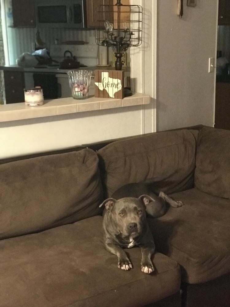 Lost Female Dog last seen Near Crape Myrtle Dr & State Hwy 92, Silsbee, TX 77656