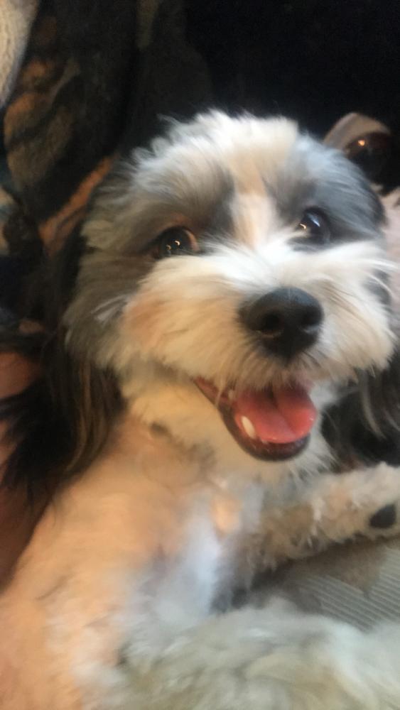 Lost Female Dog last seen Near S Xavier St & W Mississippi Ave, Denver, CO 80219