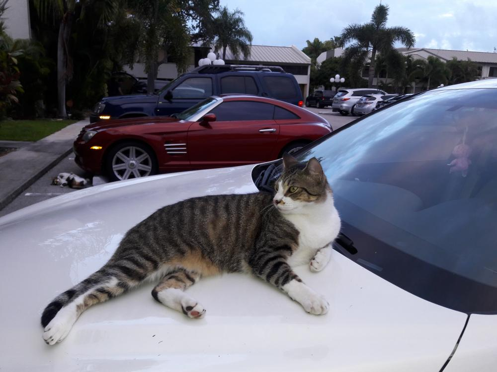 Lost Male Cat last seen Near Coral Heights Way & Coral Heights Ln, Oakland Park, FL 33334