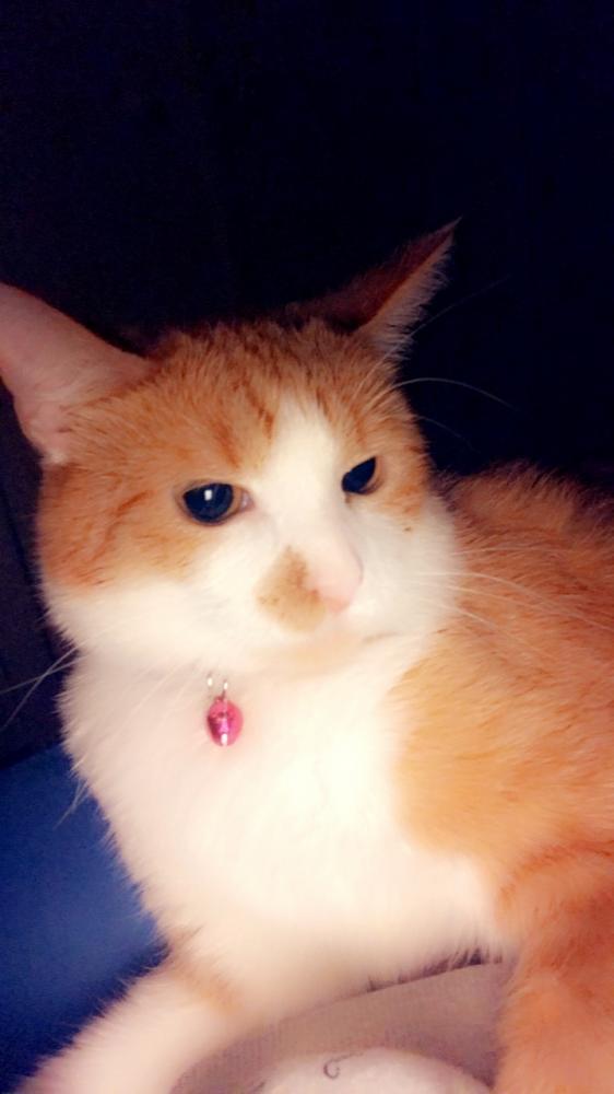 Lost Female Cat last seen Blair Rd and Columbia Pike, Falls Church, VA 22041