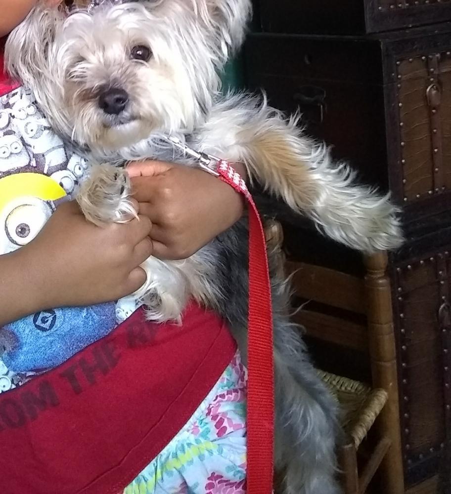 Lost Female Dog last seen Near Fertile Meadow Ct & Meadow Green Way, Gaithersburg, MD 20877