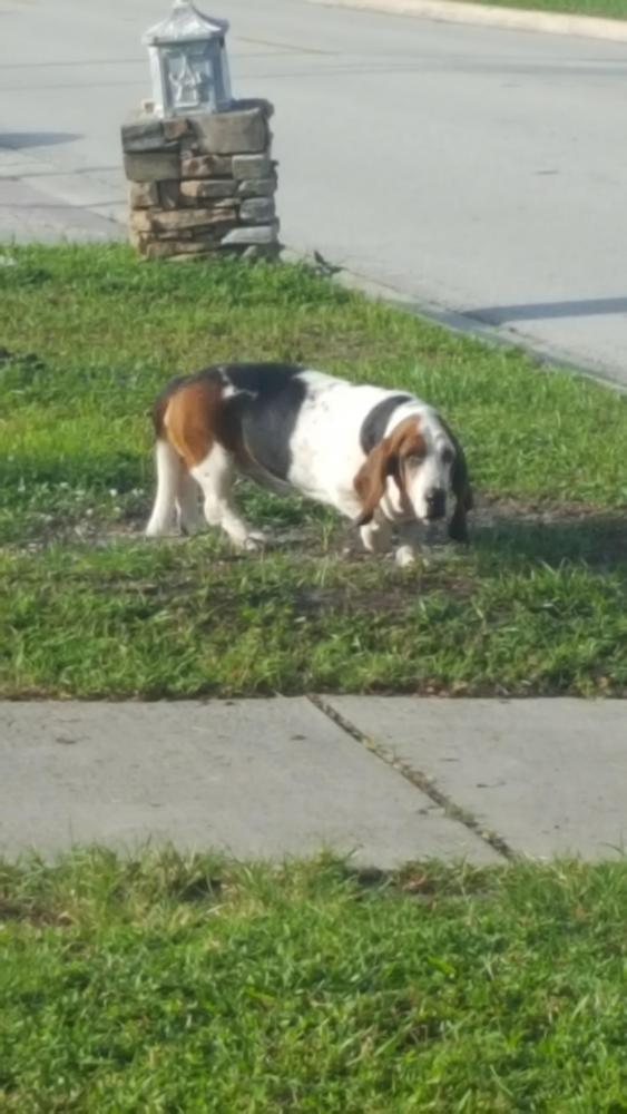 Found/Stray Male Dog last seen Near NW 69th Ter & NW 4th Ct, Margate, FL 33063