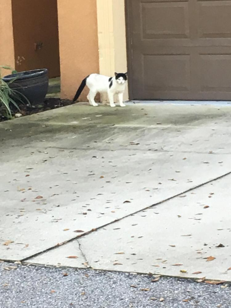 Found/Stray Unknown Cat last seen Near Morris Bridge Rd & E Fowler Ave, Temple Terrace, FL 33637
