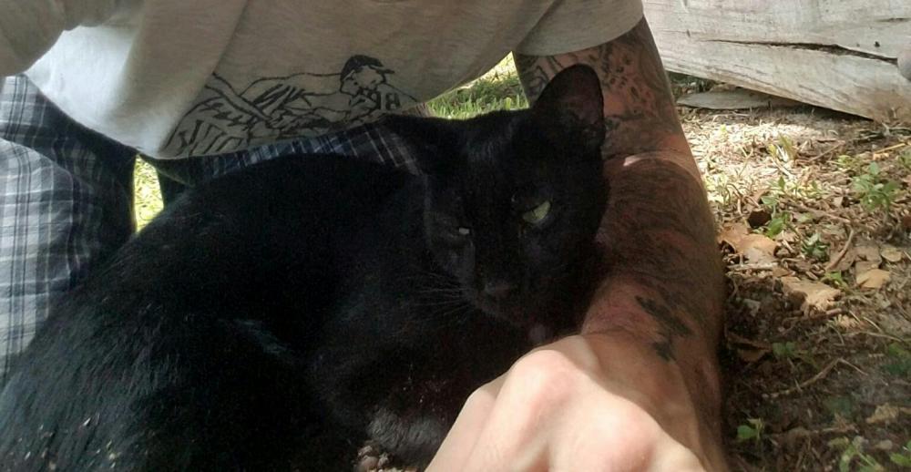 Lost Female Cat last seen Near Linton Blvd & Palm Cove Blvd, Delray Beach, FL 33445