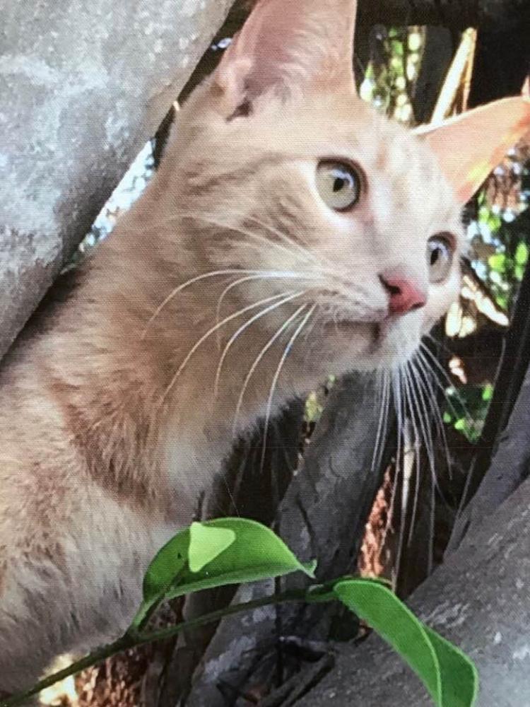Lost Male Cat last seen oakland park , Oakland Park, FL 33334
