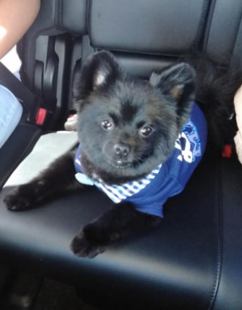 Lost Male Dog last seen Kimberly & Rock Island, North Lauderdale, FL 33068