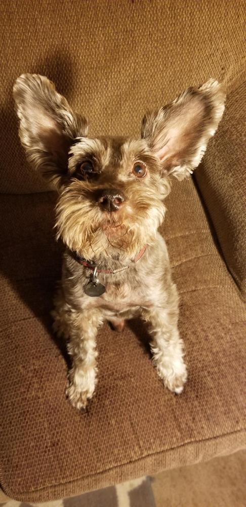 Lost Male Dog last seen Near Longfellow Dr & Brentwood Dr, Beaumont, TX 77706