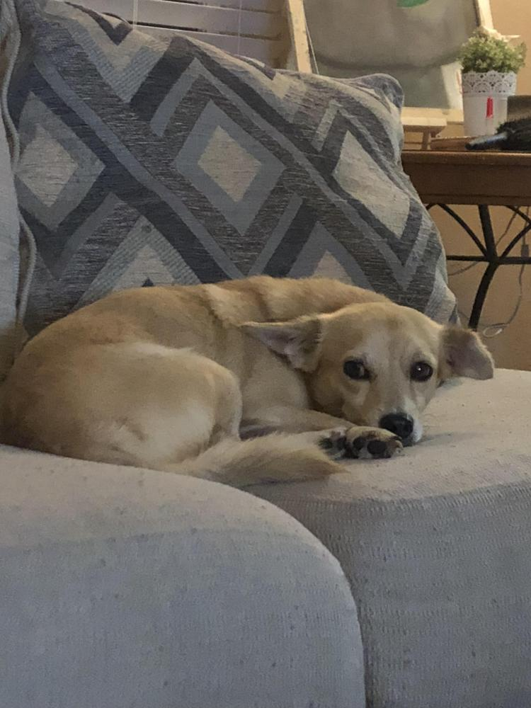 Found/Stray Male Dog last seen Near NW 5th Ct & NW 139th Ter, North Miami, FL 33168