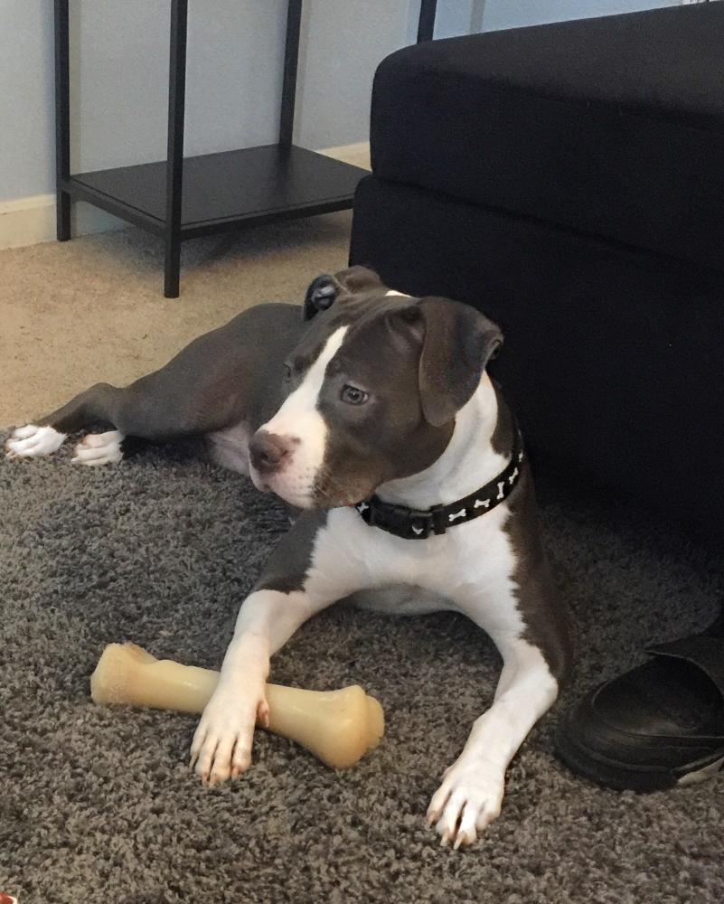 Lost Female Dog last seen Near Molly Berry Rd & Martin Rd, Brandywine, MD 20613